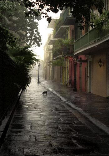 "Pirate Alley Cat<br>limited edition photograph signed and numbered<br>11"" x 14"" $110.00, 16"" x 20"" $165.00"